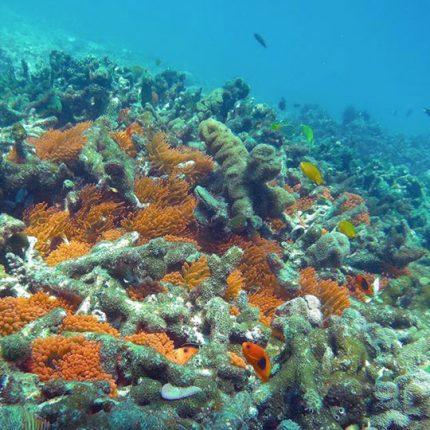 ทัวร์เกาะนาวโอพี ทะเลพม่า ทัวร์ระนอง