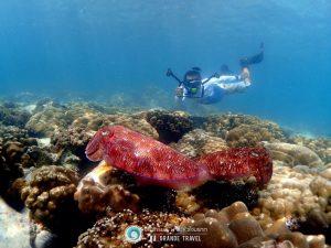 ทัวร์เกาะมุก เกาะมากุย ทะเลพม่า