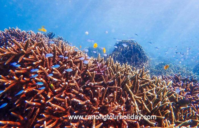 ทัวร์เกาะนาคินโย (Boulder Island) เกาะพม่า 1 วั